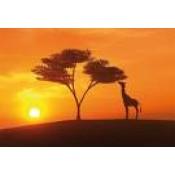 Afryka (84)